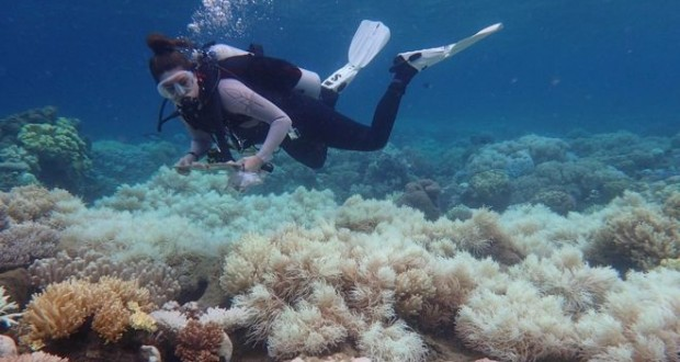 Great Barrier Reef: Two-thirds damaged in 'unprecedented' bleaching
