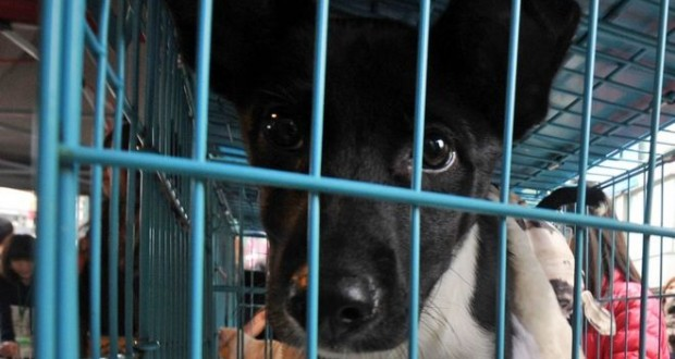 Taiwan officially bans eating cat and dog meat