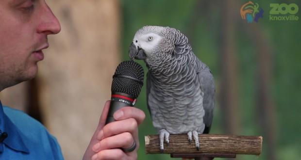 Meet the mind-blowing parrot that can talk like Matthew McConaughey