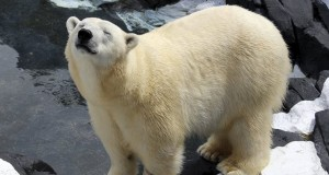 Polar bear dies unexpectedly at SeaWorld
