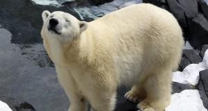 Polar bear dies unexpectedly at SeaWorld