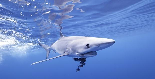 Australian man 'stunned' after shark jumps into boat