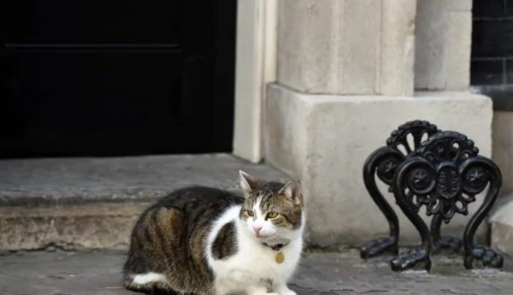 Larry the cat holds the fort outside Number 10 as country is plunged into chaos