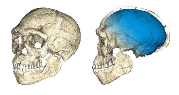 World's oldest Homo sapiens fossils found in Morocco