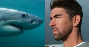 Michael Phelps Lost Race To Great White Shark At Shark Week