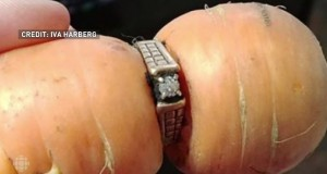 Diamond Ring Lost In 2004 Found On Carrot